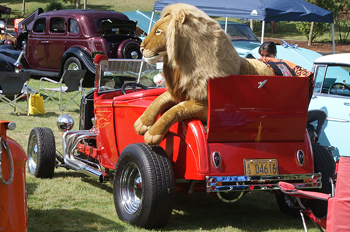 Lion in roadster